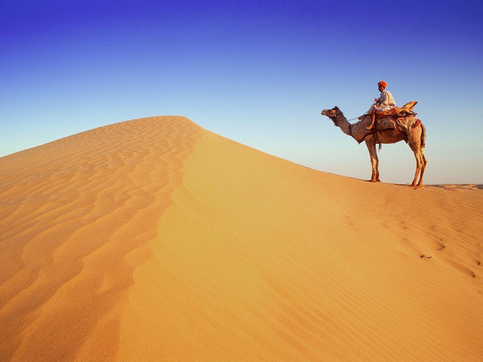 camel-walk-in-desert-wallpaper